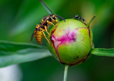 L'amie de la fourmi